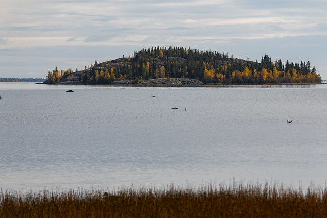Island, Yellowknife Bay, Yellowknife, Great Slave Lake, NWT