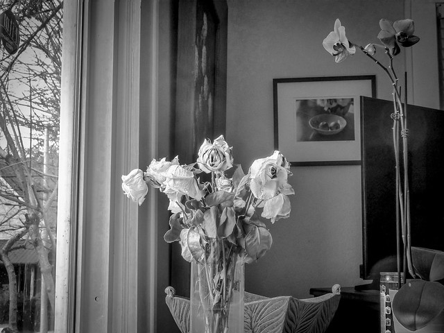 wilting roses, orchid blossoms, framed photograph, picture window, Asheville, NC, Panasonic Lumix ZS50, 12.8.19