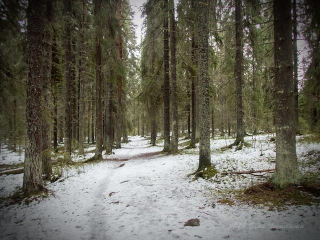 Joensuu - Finland