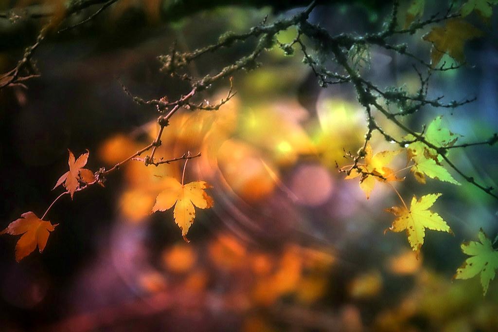 Autumn Light. A Slider :-)