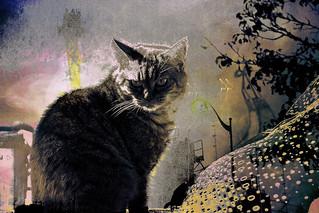 chat de gouttière....