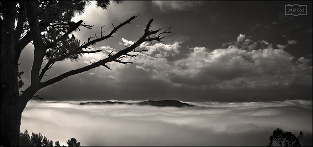 Pino y nubes / Pine and clouds