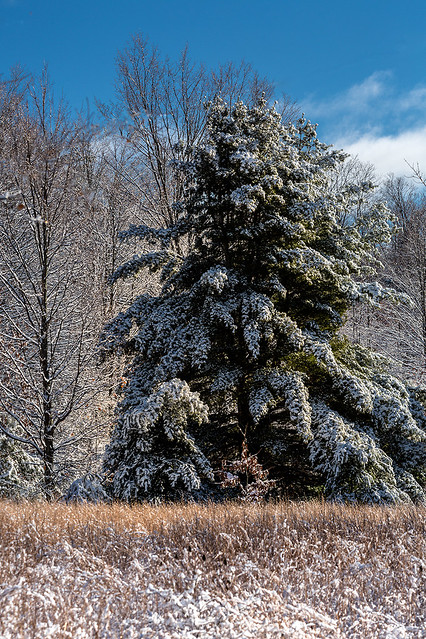 Winter Ice and Snow_27