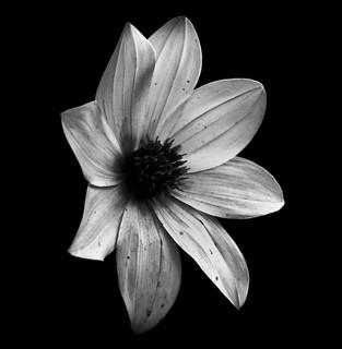 A Flower!