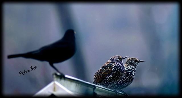 Popular bird meeting point 💖