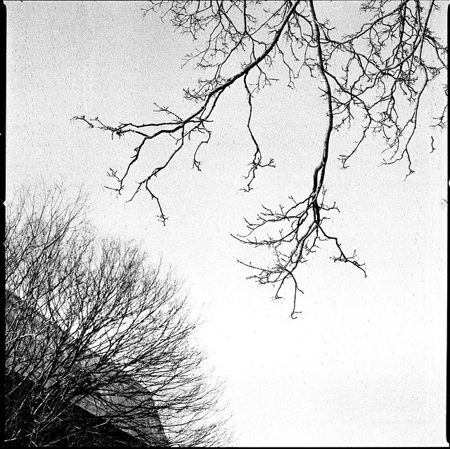 Winter Now - Film Hasselblad