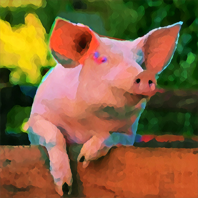 Have You Ever Danced With A Pig?