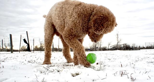 Dog play behind a 24mm.