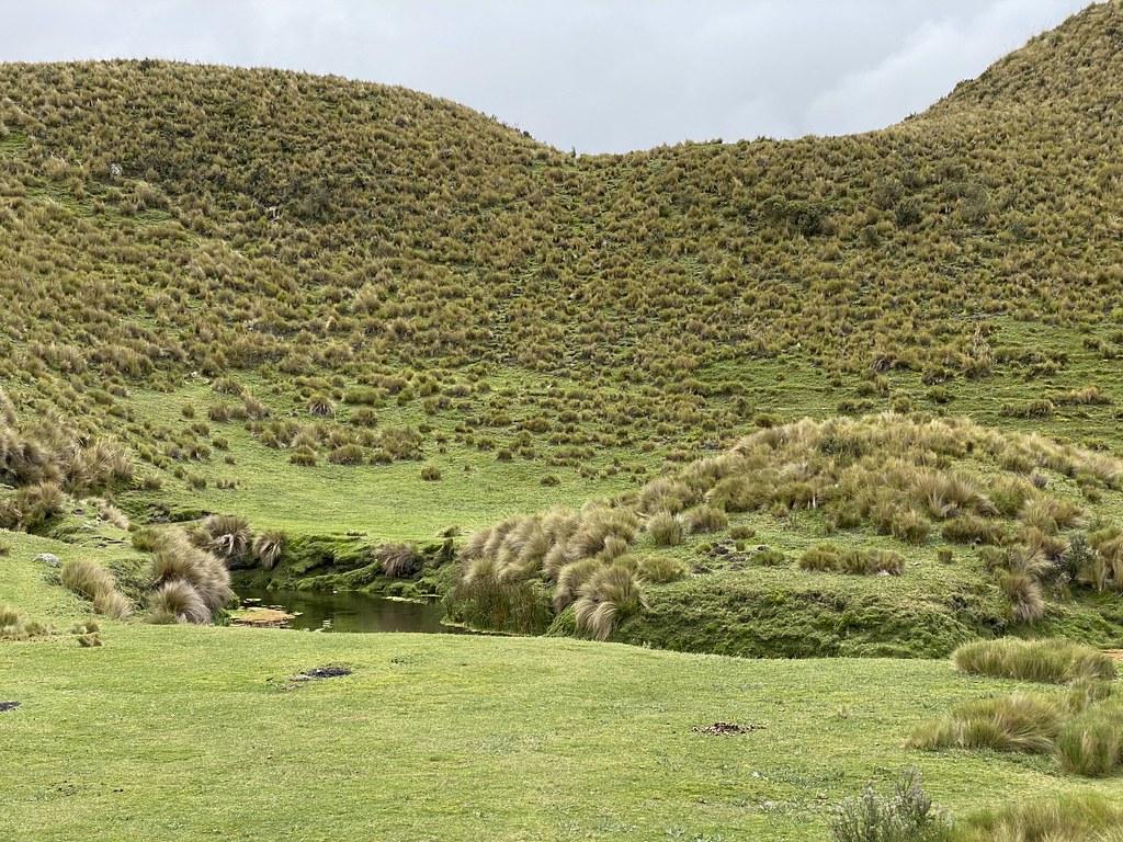 Páramo (Grassland), Downhill Mountain Biking on Cotopaxi Volcano at 3,760 meters (12,335 ft), Park in Parque Nacional Cotopaxi, Ecuador.