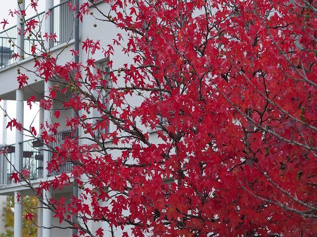 L'automne à Villaroy