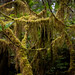 A walk through the forest at Scenic Beach State Park, Seabeck, Washington