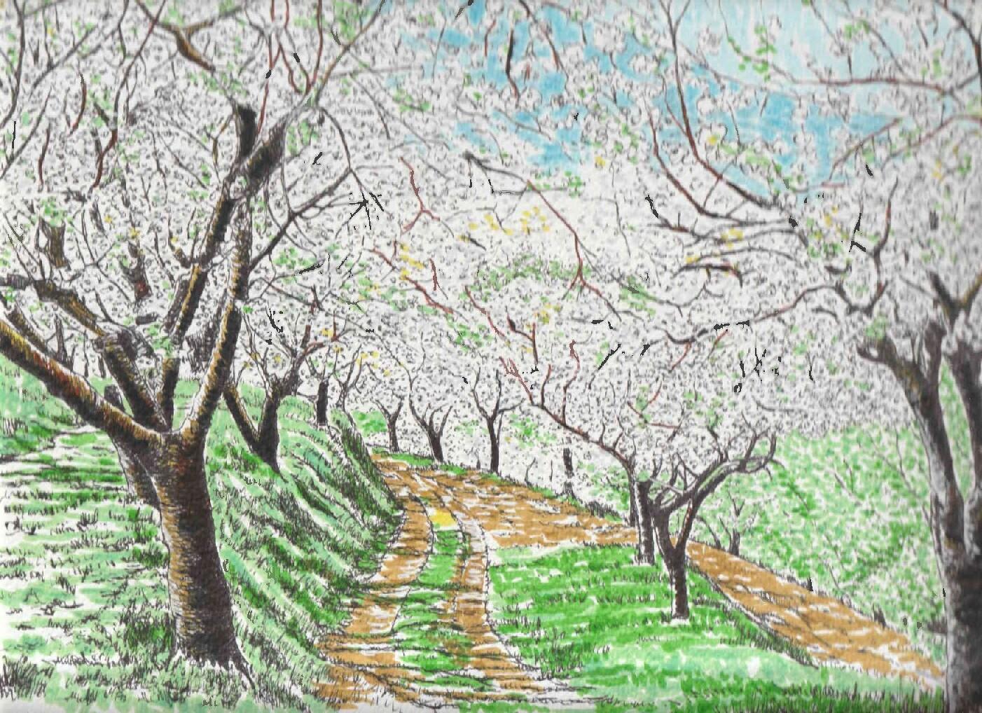 Cerezos en flor en el Valle del Jerte (Cáceres).
