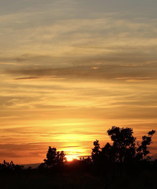 Sunset Rupununi Savanna_Ascanio_Guyana_199A7951