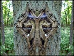 wappenbaum - arms tree