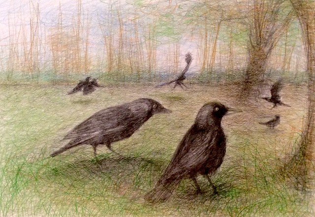 Jackdaws. Coloured pencil drawing on card by jmsw.