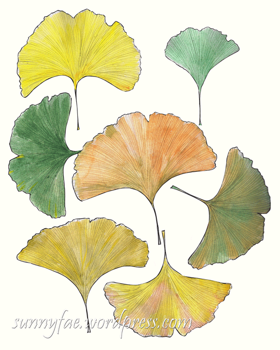 ginkgo watercolour sketch