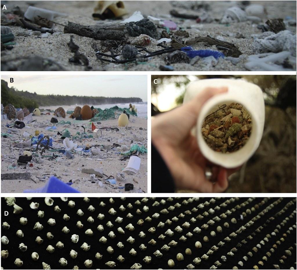 Entrapment in plastic debris endangers hermit crabs