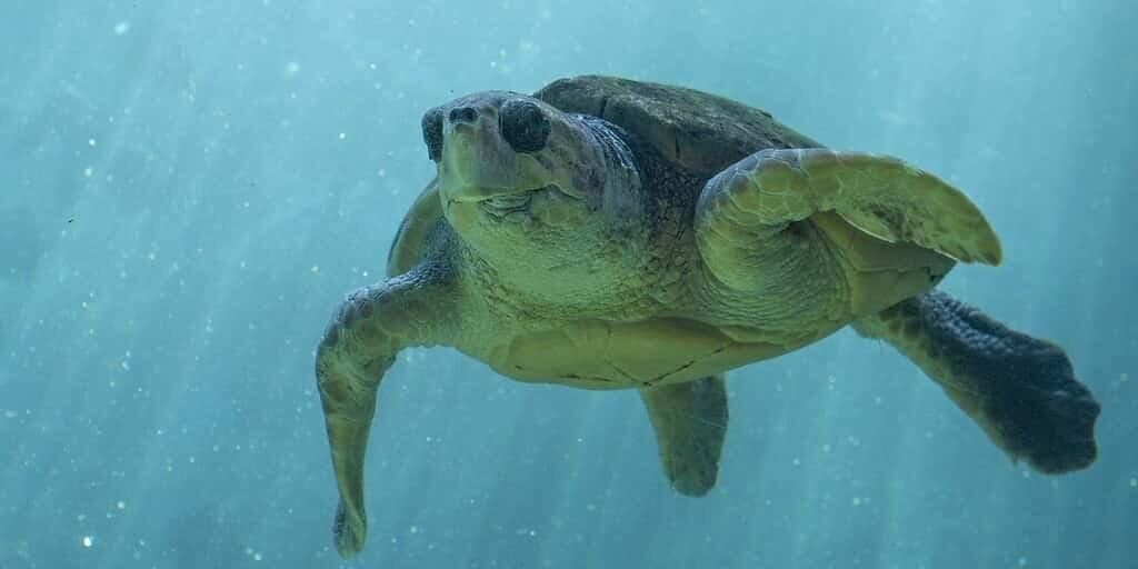 Des filets maillants à DEL pour protéger les espèces marines