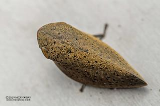 Spittlebug (Plinia sp.) - DSC_2008