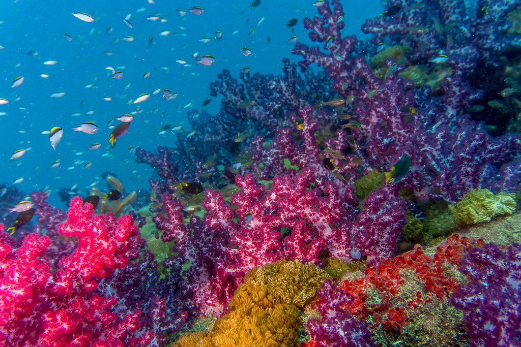 Yongala soft corals 3