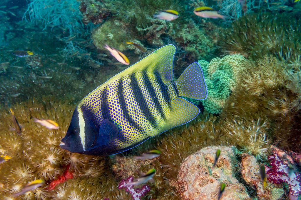 Yongala soft corals 2