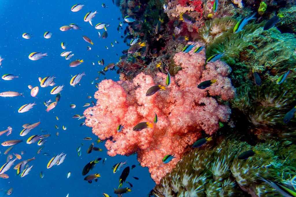 Yongala soft corals 1