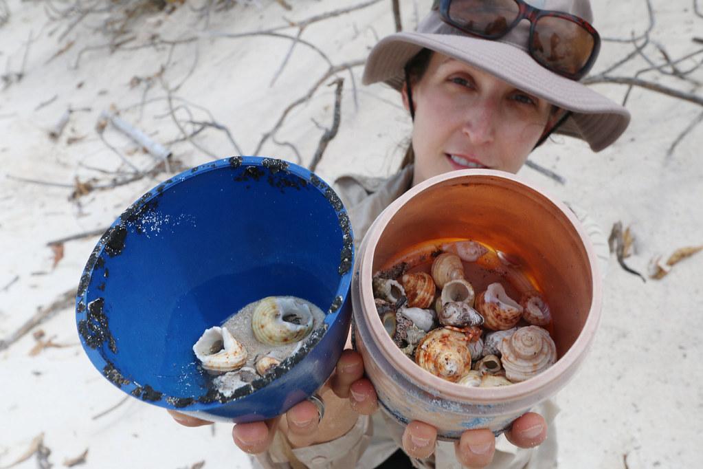 寄居蟹正因塑膠垃圾而大量死亡。照片來源:julie burgher(CC BY-NC-ND 2.0)