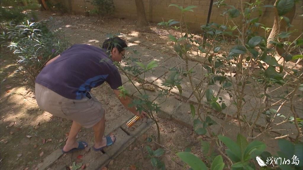 殺蟲劑並沒辦法徹底根除蟻害,反而會把琉璃蟻越趕越遠,讓蟻害範圍更加擴大。