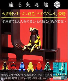 那斑斕絢麗的色彩猶如森林裡的華美寶石! 奇譚俱樂部【坐著的箭毒蛙】座る矢毒蛙 危險登場~