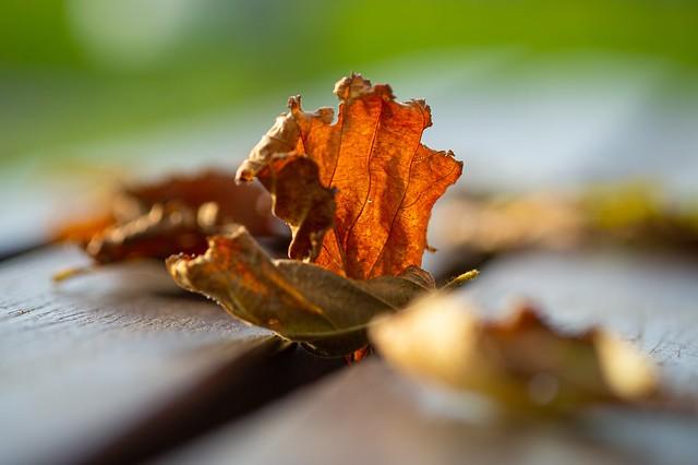 Shining in the warm autumn sun 🍂☀️🍁
