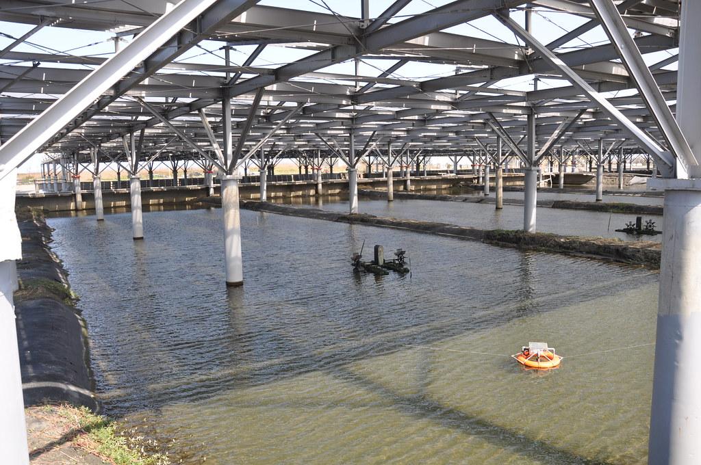 棚架式光電設施可減少高溫、排除雨水,圖中橘色浮球為水質即時監控設備。孫文臨攝