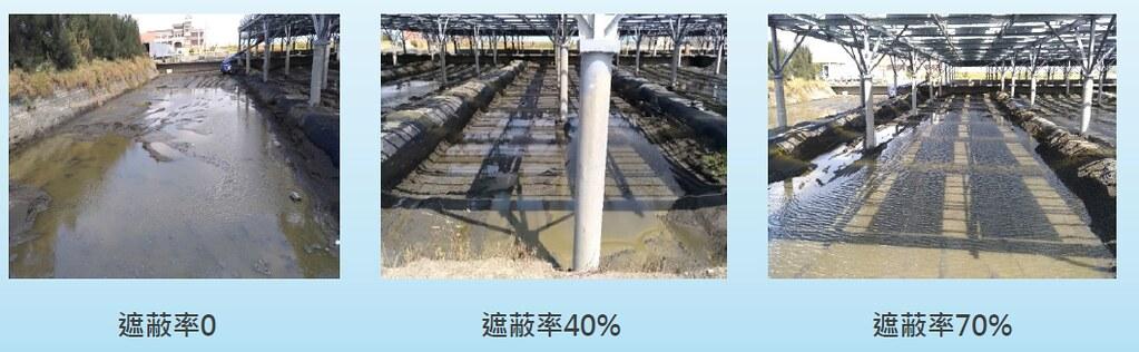 棚架式太陽光電文蛤遮蔽率試驗實景圖。台灣農業科技資源運籌管理學會