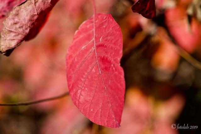 Rojizo de otoño.