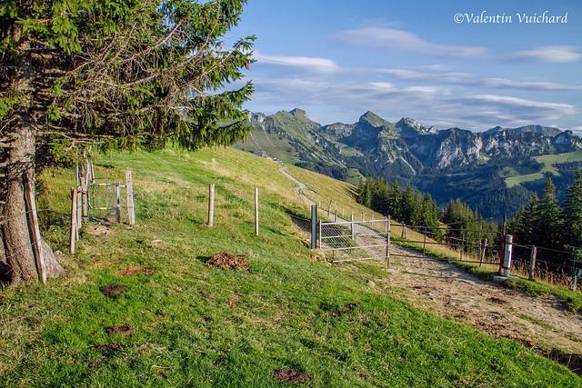 SF-_MG_3563 - Alpine landscape near la Berra, Gruyère region - Switzerland