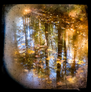 Fall Reflections TtV
