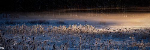 cranberry bog chelmsford carlisle winter fog snow sunrise