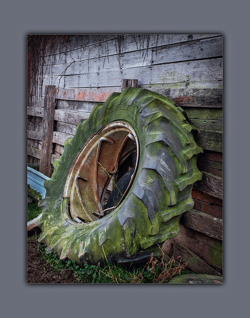 Old Moss Covered Tractor Tire