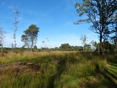 Nature area Beerzerveld near Mariënberg - Overijssel