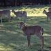 """<p><a href=""""https://www.flickr.com/people/runarut/"""">runarut</a> posted a photo:</p>  <p><a href=""""https://www.flickr.com/photos/runarut/49193279211/"""" title=""""Fossil Rim Wildlife Center""""><img src=""""https://live.staticflickr.com/65535/49193279211_e895010bd8_m.jpg"""" width=""""240"""" height=""""177"""" alt=""""Fossil Rim Wildlife Center"""" /></a></p>  <p>Glen Rose, Texas, USA</p>"""