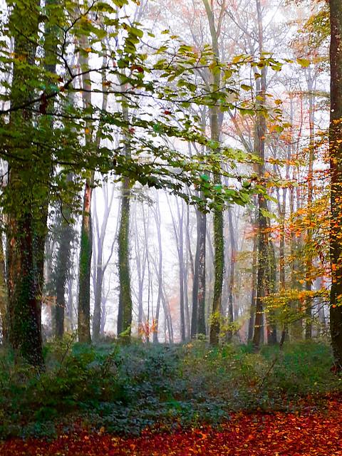 En forêt.