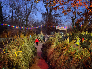 Christmas 🎄 trees at Dominion Hills, Arlington Virginia. Dec. 2019