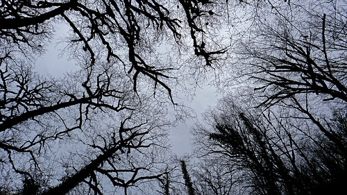nature view landscape sky cloud blue tree