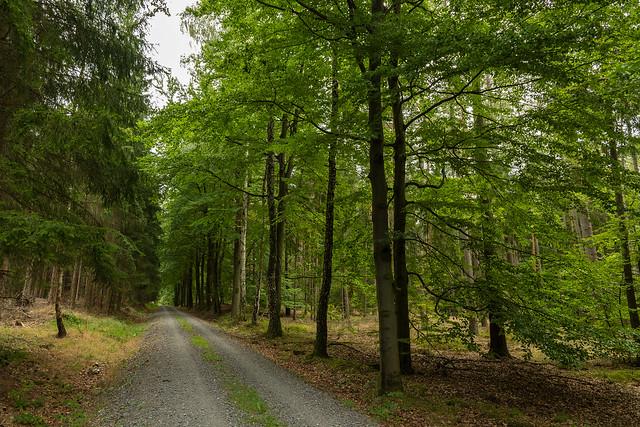 Unser Wald  (13)