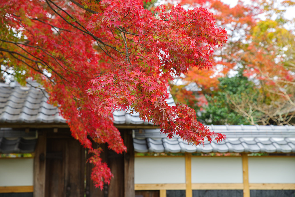 20191121_kyoto (10)