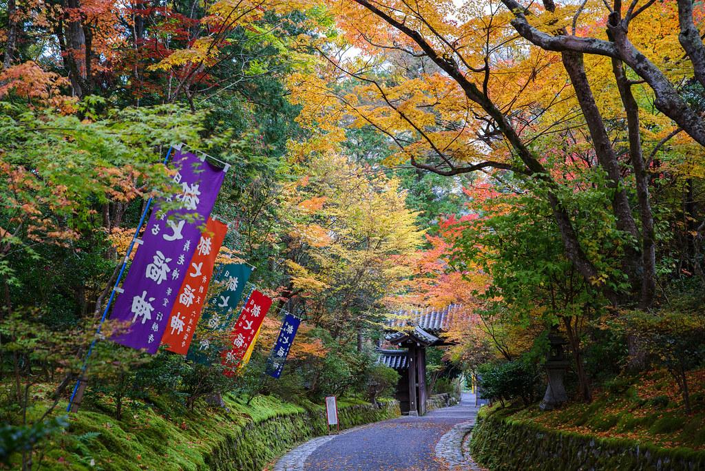 20191121_kyoto (7)