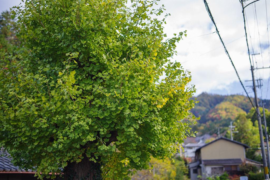 20191121_kyoto (26)
