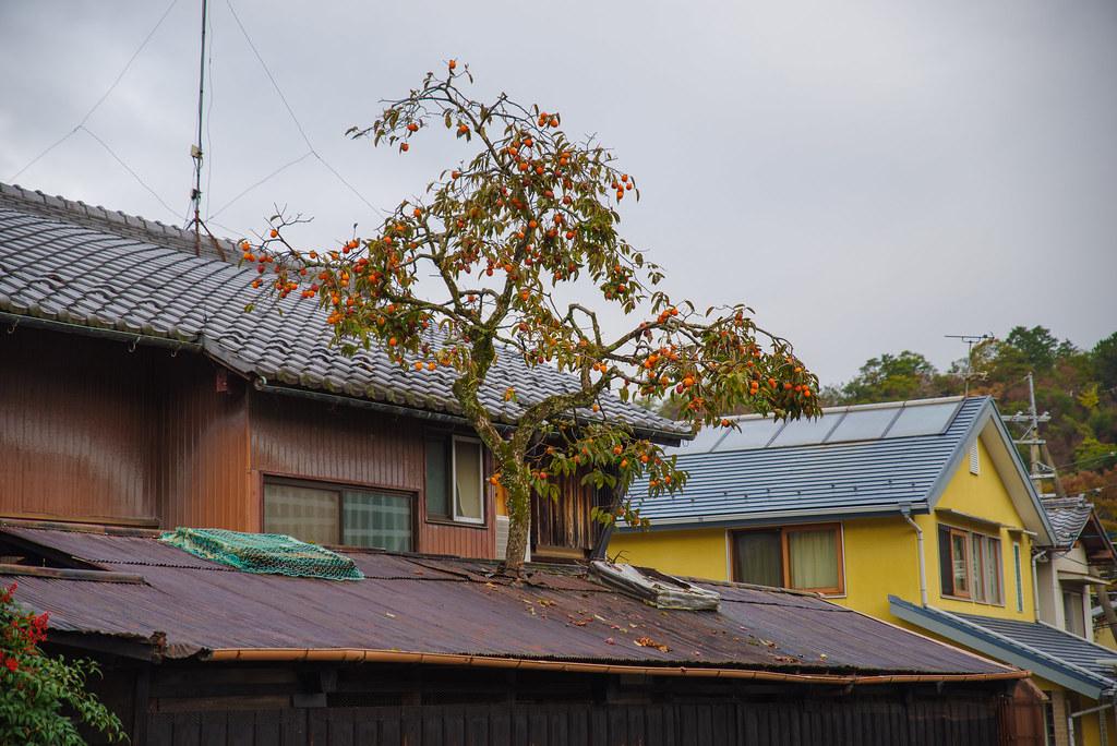 20191121_kyoto (8)