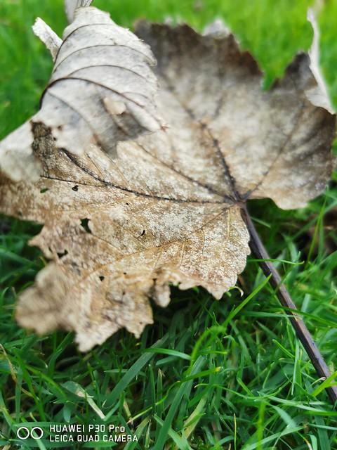 #Leaf #macro #photography #shot  #bokeh