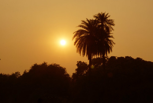 city urban india delhi silhouette trees sunset orange humayunstomb tomb topic