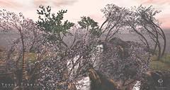 Little Branch: Young Tibetan Cherry